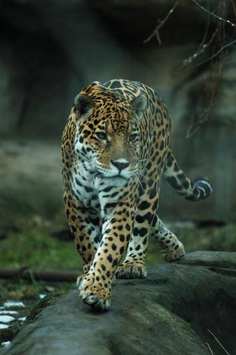 Зоопарк Лимассола. Возрождение.