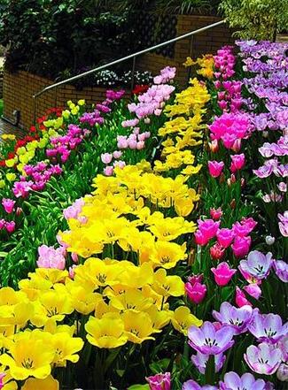 Праздник цветов в Лимассоле